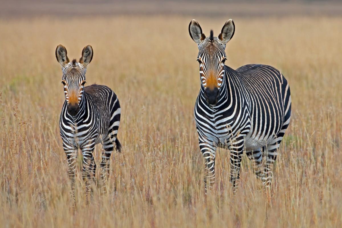 safari en amoureux en tanzanie